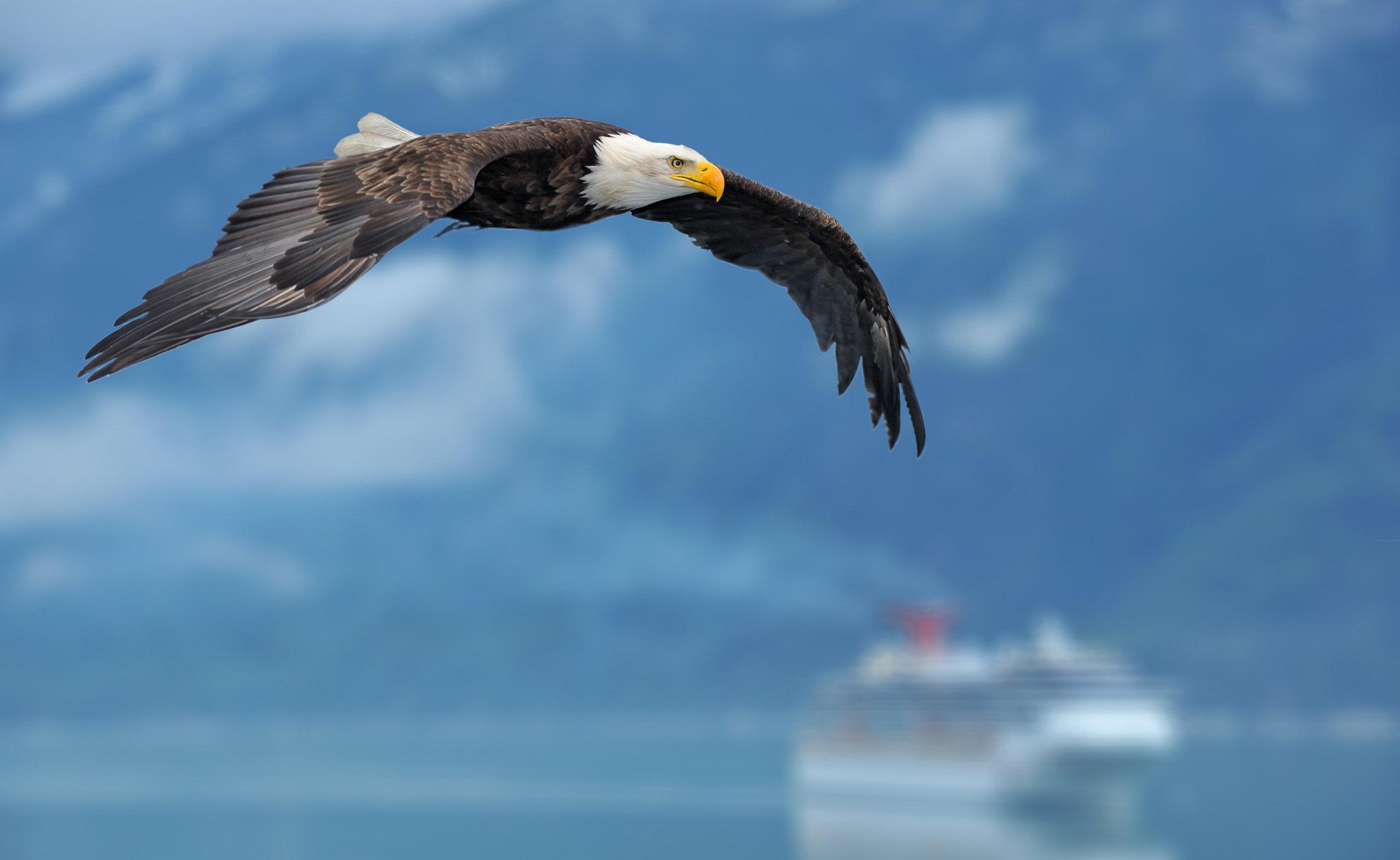 eagles wallpaper iphone