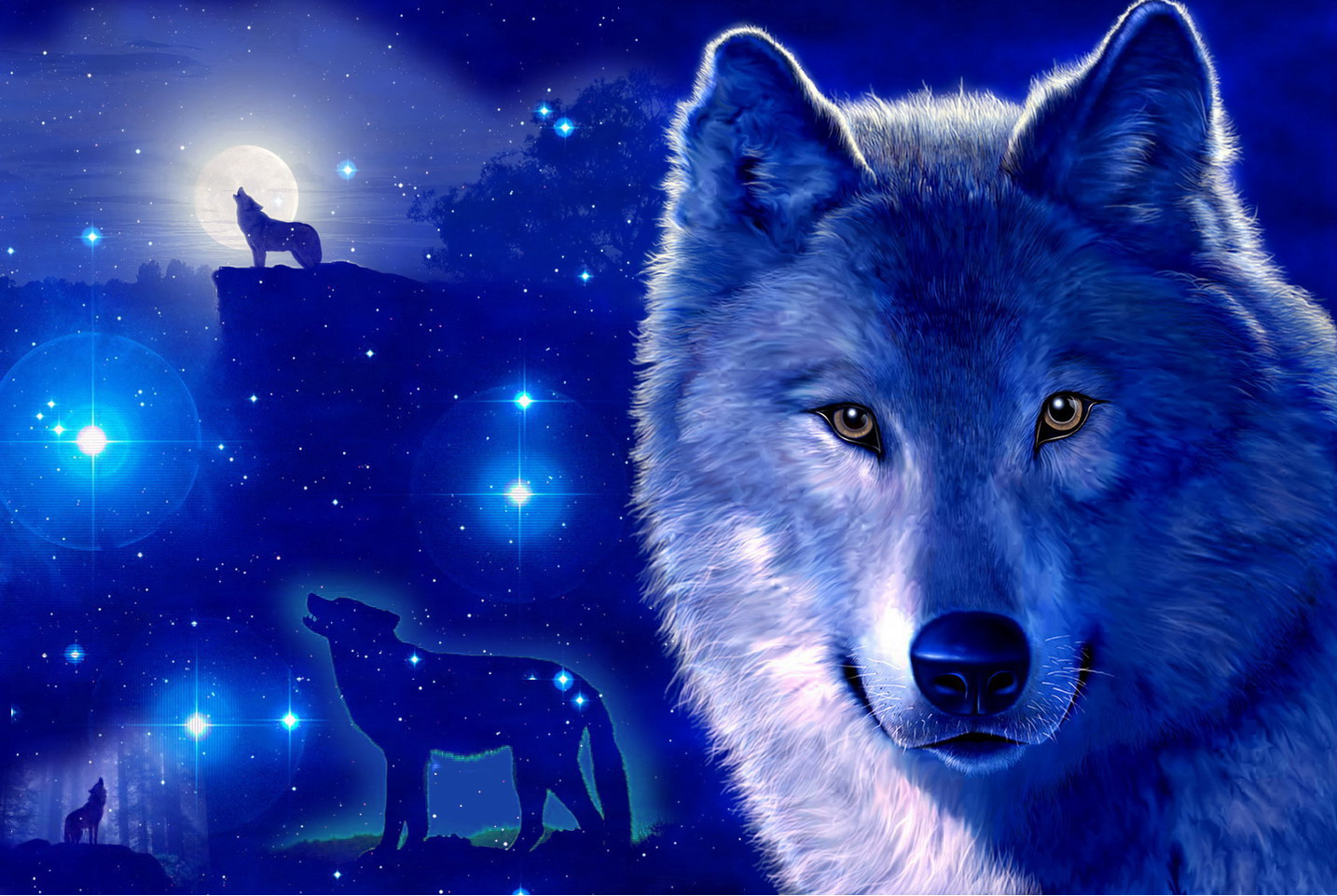 Wolf Wallpaper And Background Image