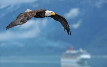 Animal - Eagle Wallpapers and Backgrounds ID : 289198