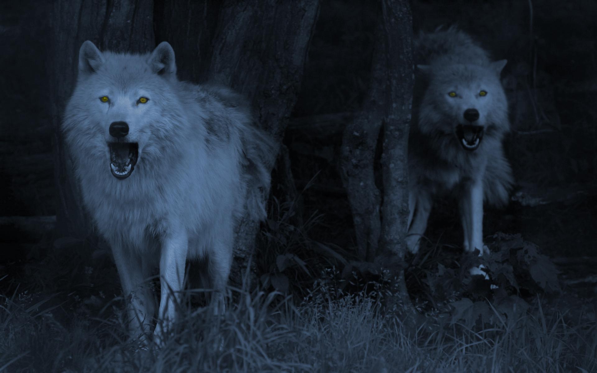 wolf computer wallpaper hd - photo #25