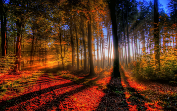 Earth - Autumn Wallpapers and Backgrounds ID : 293524