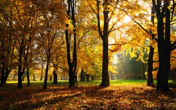 Earth - Autumn Wallpapers and Backgrounds ID : 297528