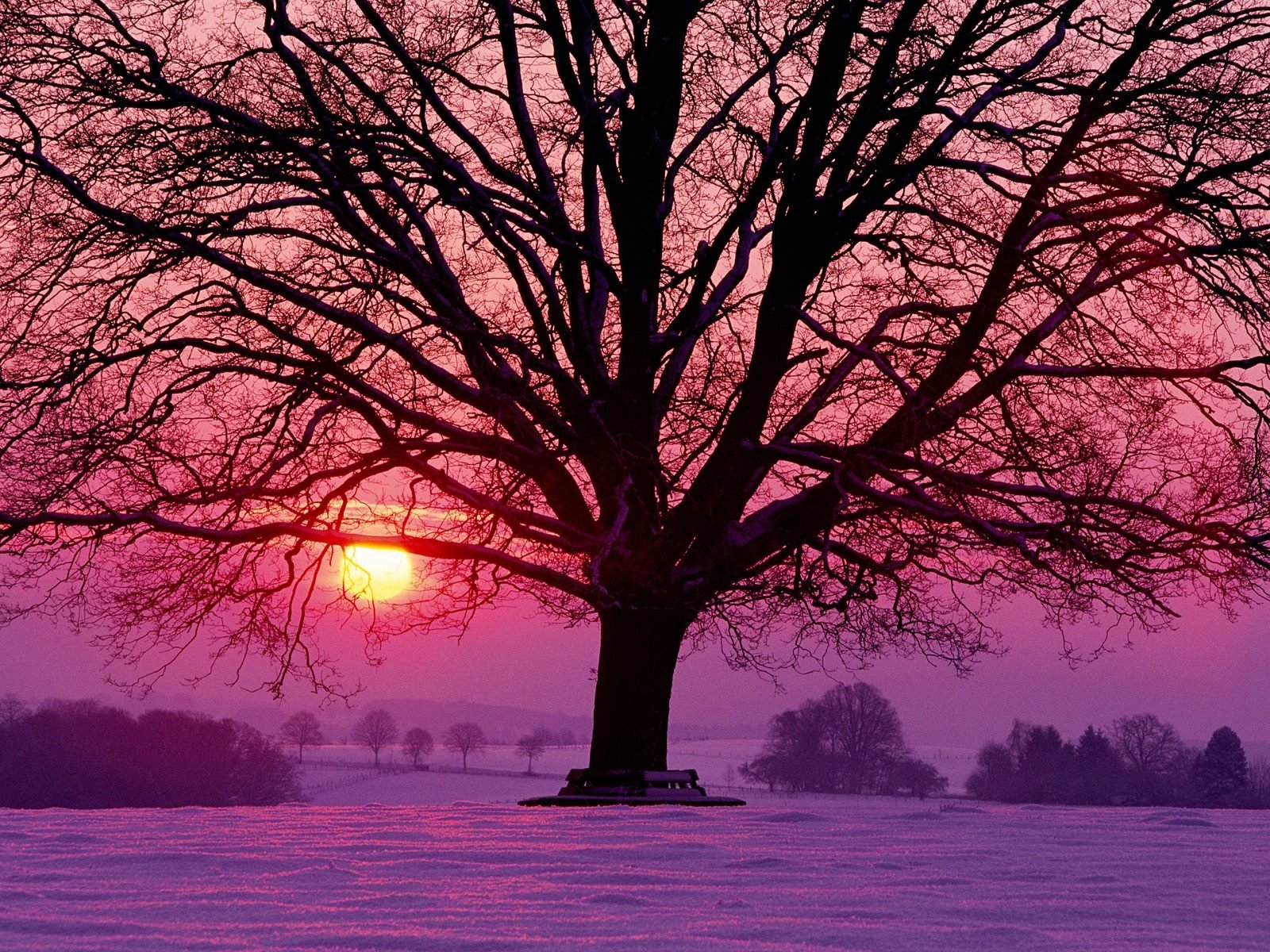 Earth - Sunset  Sun Tree Snow Wallpaper