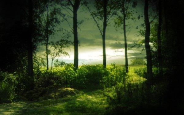 Tierra/Naturaleza Árbol Arboles Bosque Fondo de pantalla HD | Fondo de Escritorio