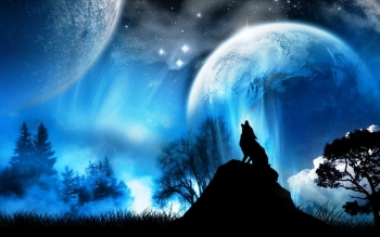 Animal - Wolf Wallpapers and Backgrounds ID : 36486