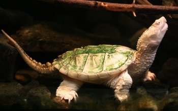 Animalia - Tortuga Wallpapers and Backgrounds ID : 37718