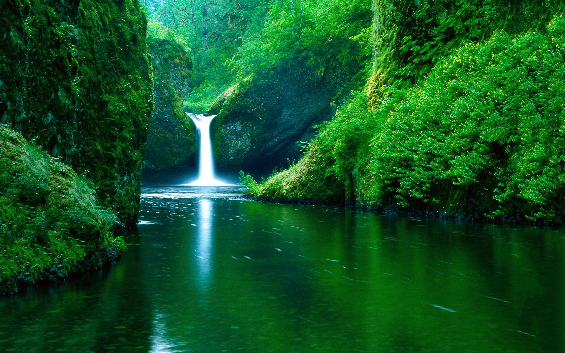 Earth - Waterfall  Forest Water Green Earth Wallpaper