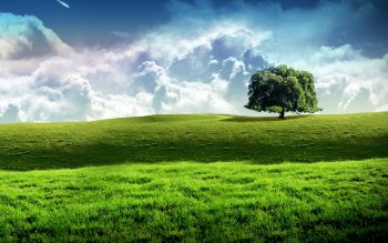 Earth - Field Wallpapers and Backgrounds ID : 4194