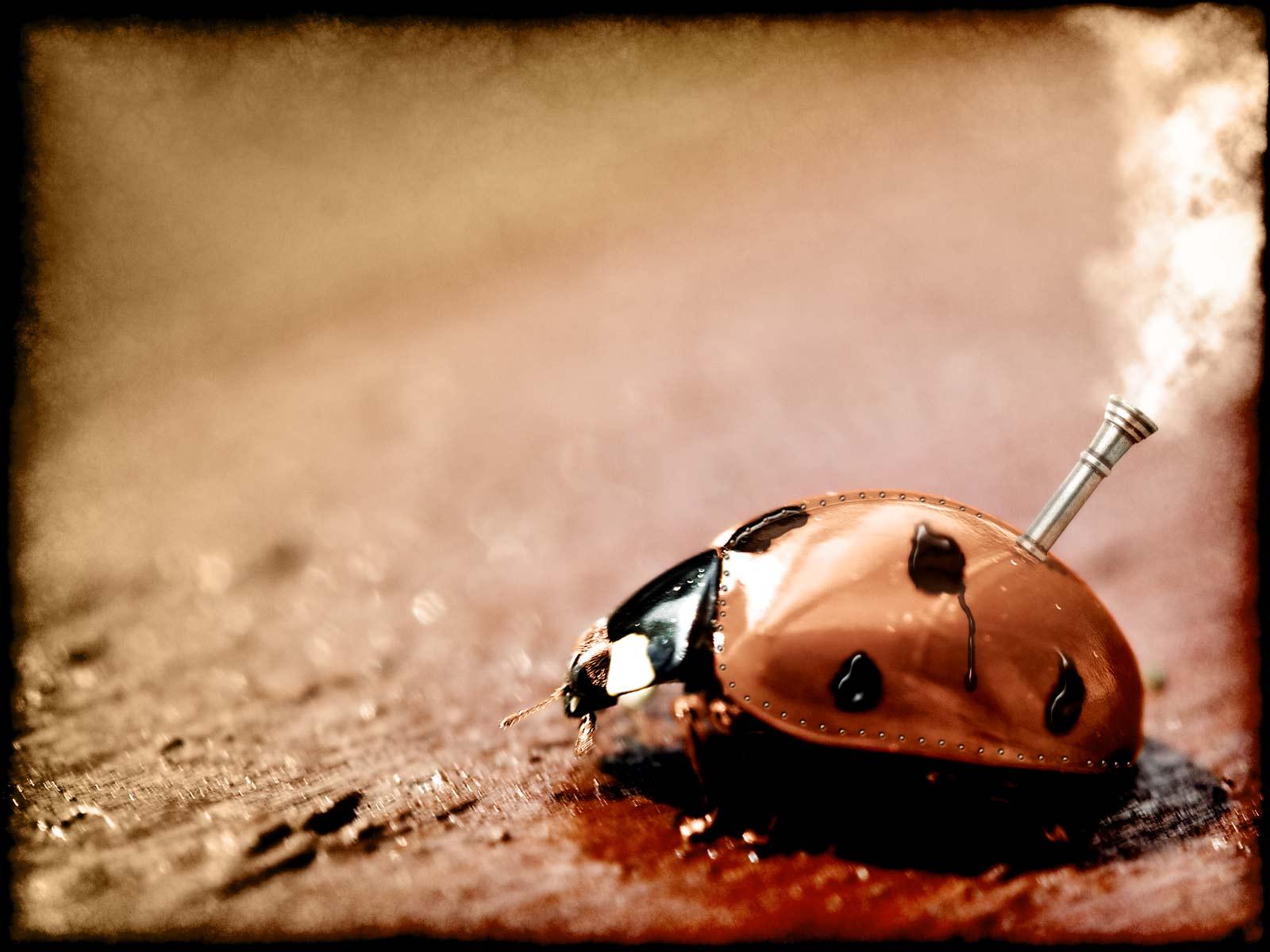 Humor - Animal  Ladybug Wallpaper