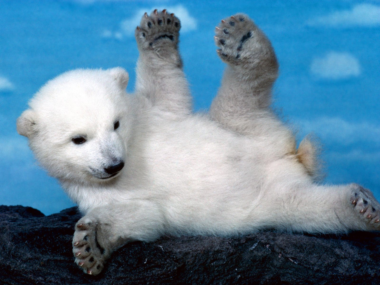 382 Polar Bear HD Wallpapers