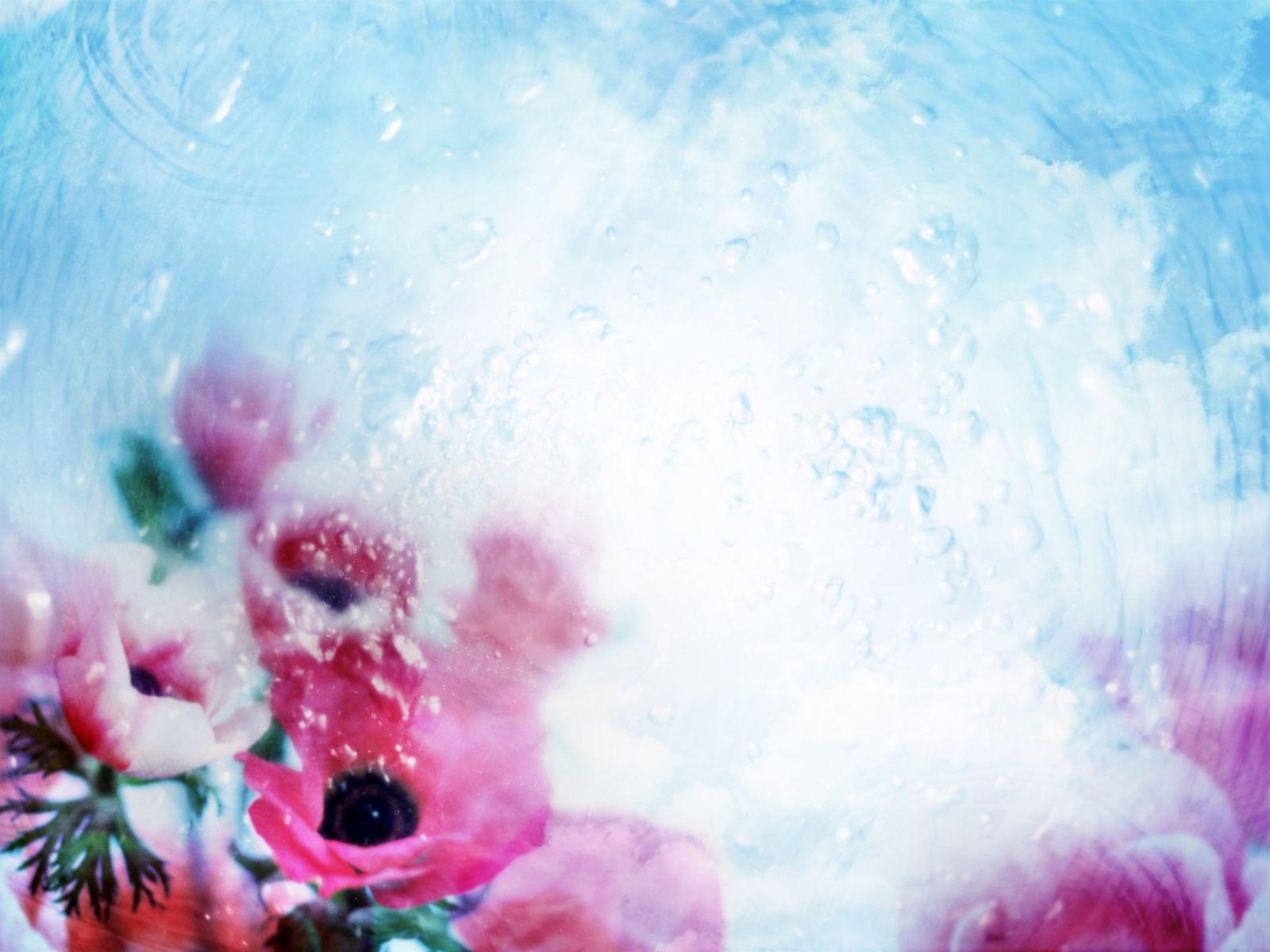 Fiori Sfondo And Sfondi 1600x1200 Id 4474 Wallpaper Abyss
