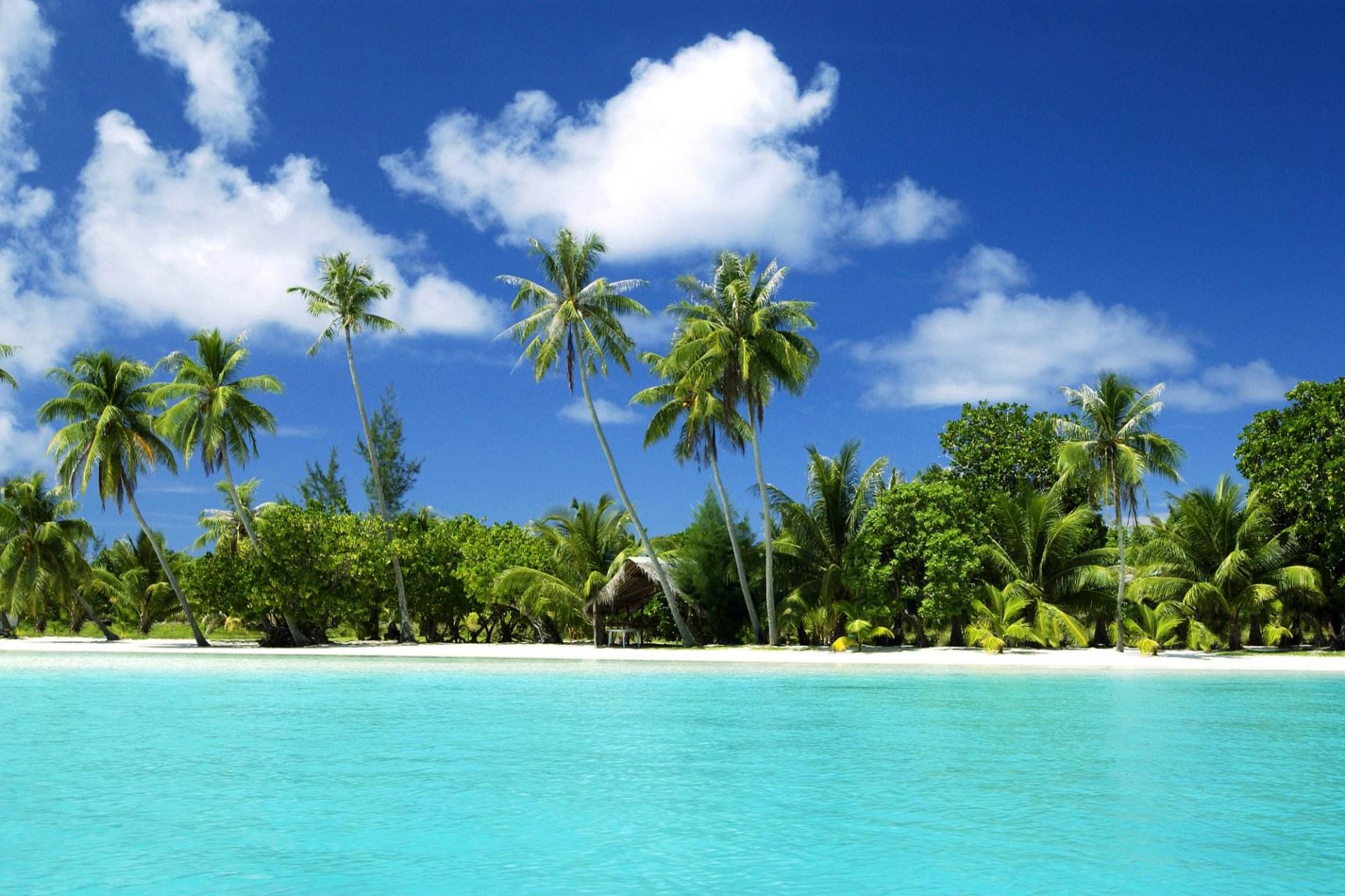Earth - Beach  Tree Palm Tree Hut Sea Cloud Wallpaper