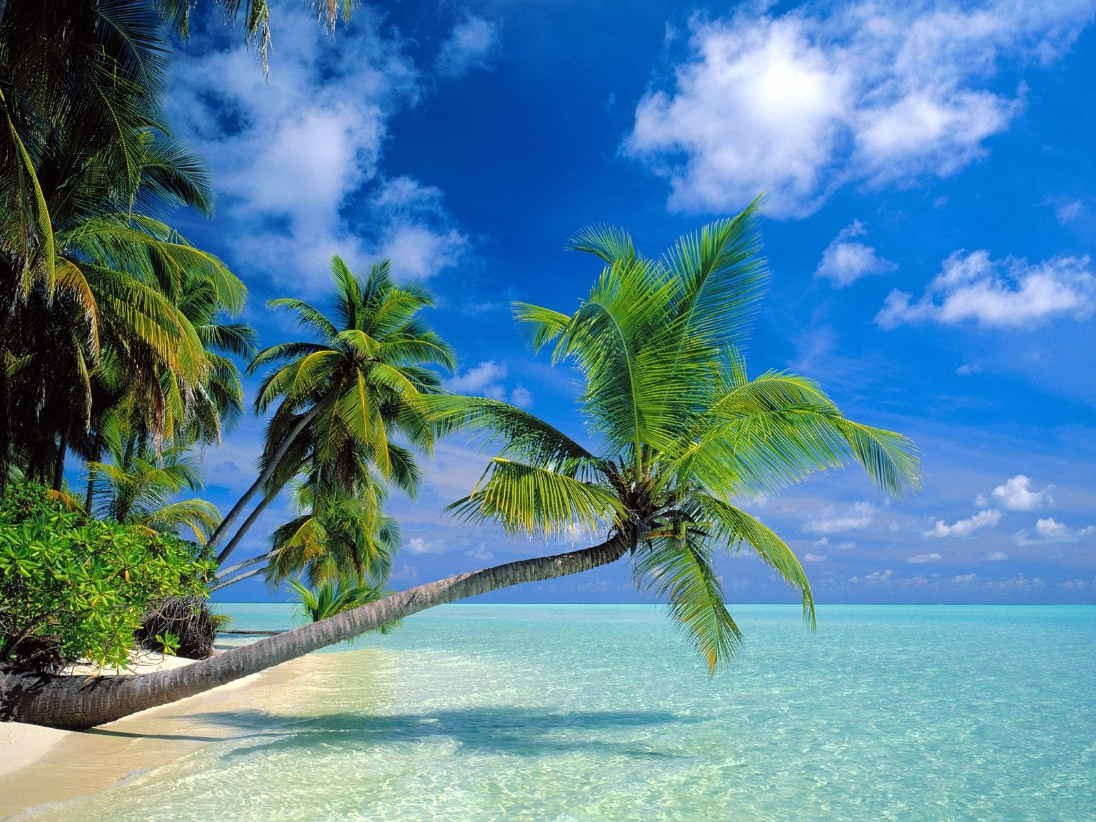 Tierra - Playa  - 1440x900 - Spring - Splendid Fondo de Pantalla