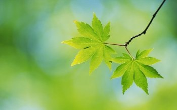 1415 Leaf Hd Wallpapers Background Images Wallpaper Abyss