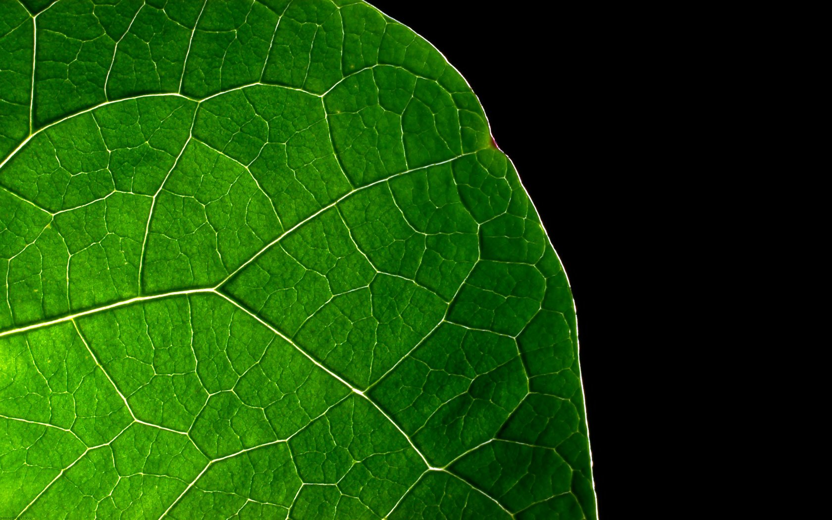 Earth - Close Up  Photography Leaf Cellulose Plant Wallpaper