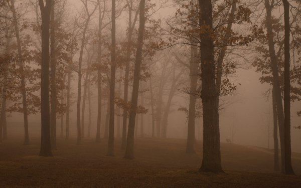 Earth Fog Tree HD Wallpaper | Background Image