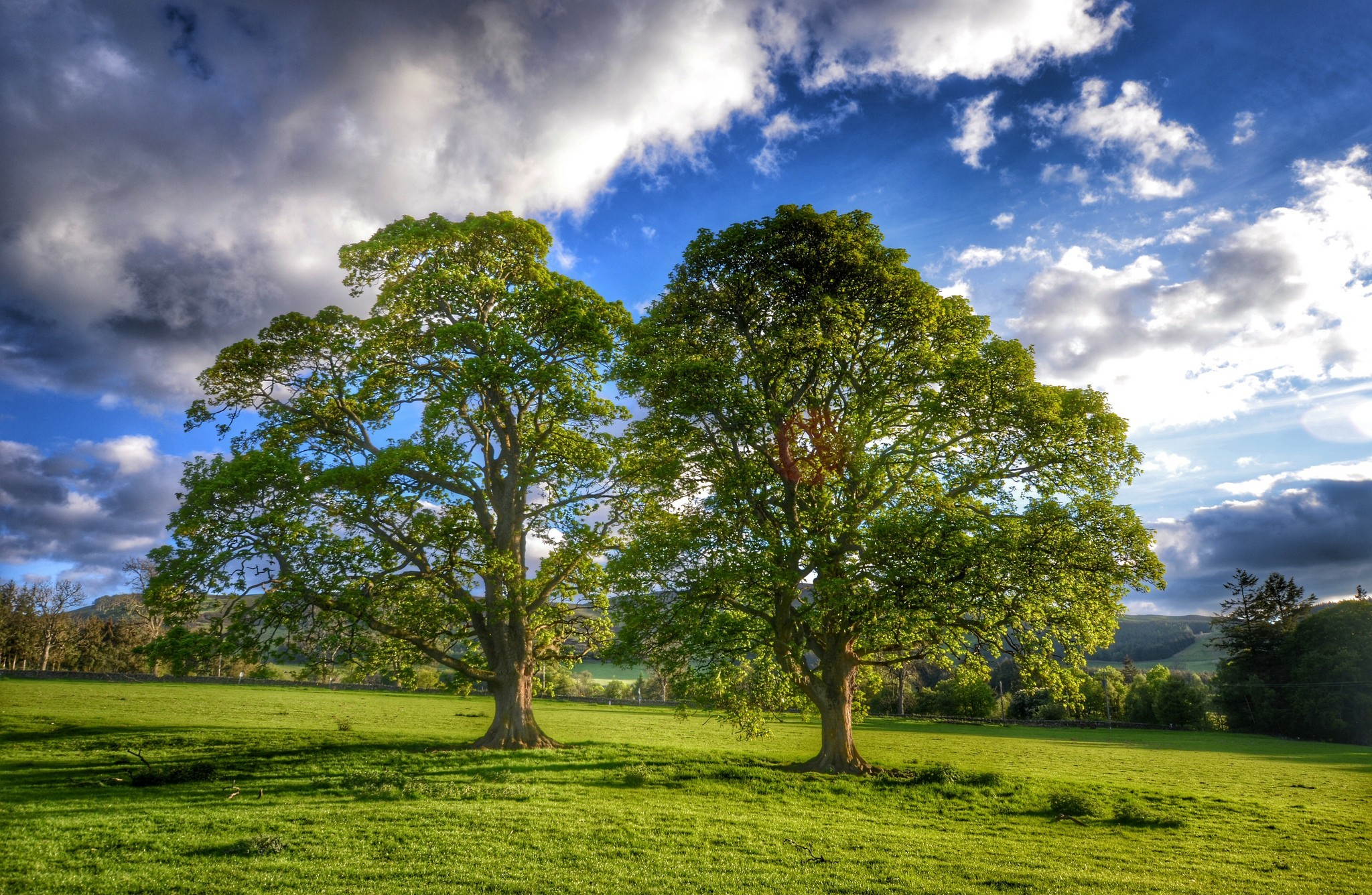 Oak Tree Full Hd Wallpaper And Background Image