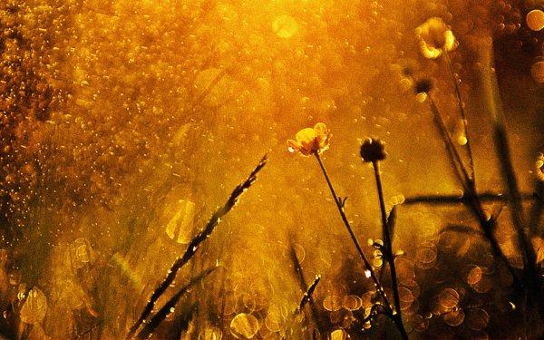 Erde/Natur Szene Liebe Sonne HD Wallpaper | Hintergrund