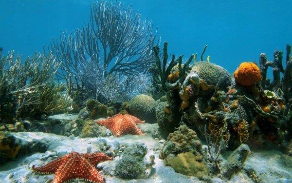 Animal Starfish Sea Bed HD Wallpaper   Background Image