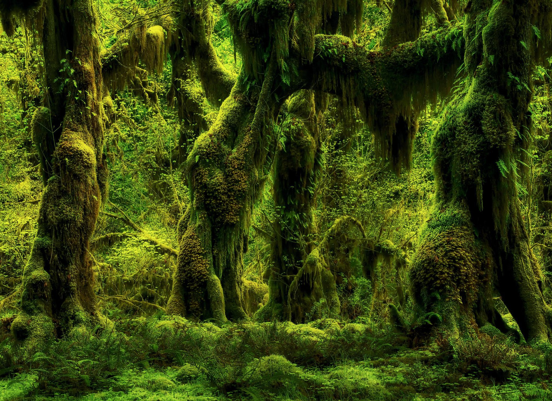 Earth - Forest  Tree Moss Wallpaper