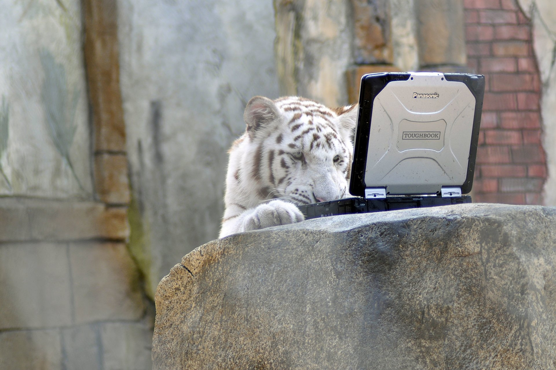 2 Panasonic Toughbook HD Wallpapers | Background Images - Wallpaper Abyss