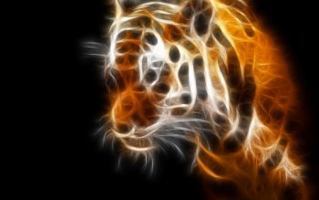 Animal - Tiger Wallpapers and Backgrounds ID : 58916