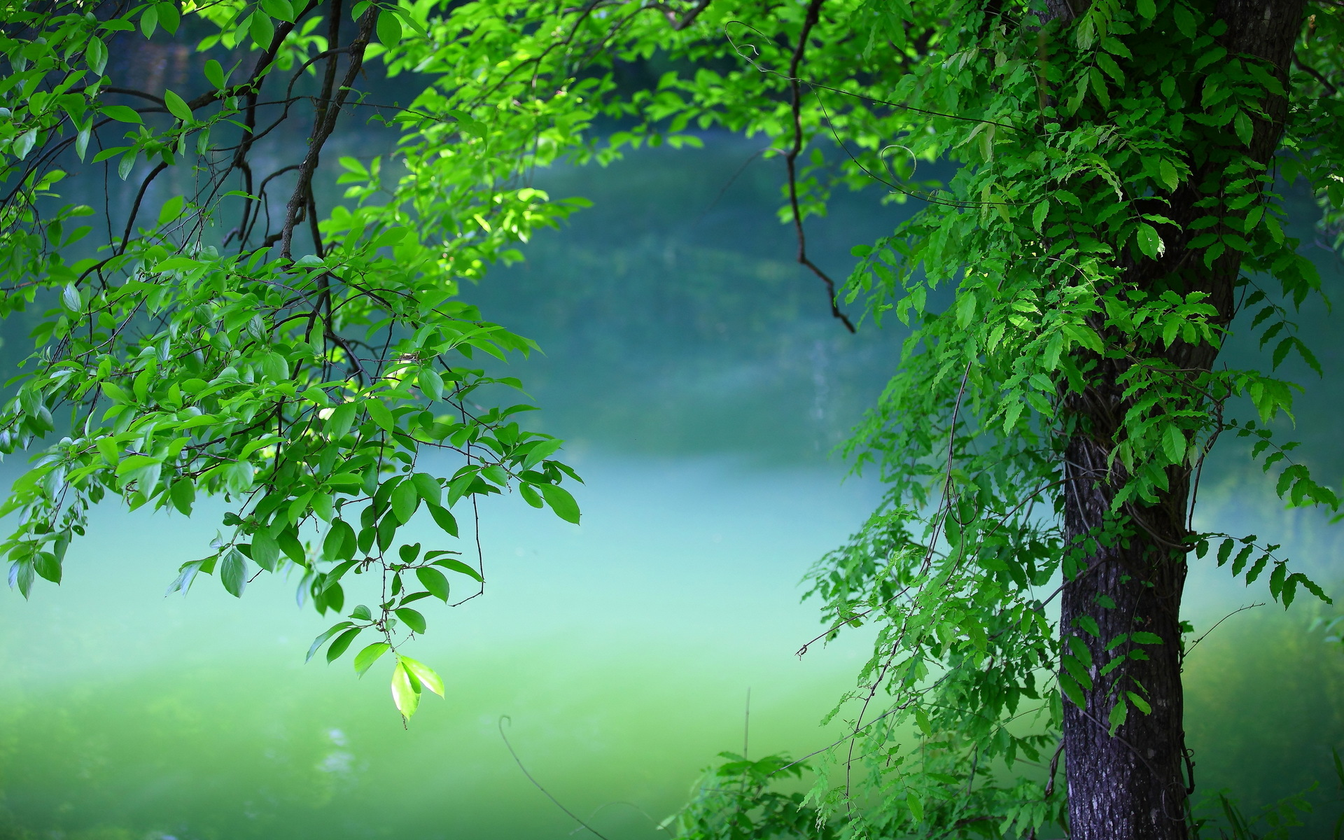 Tree hd wallpaper background image 1920x1200 id 590348 wallpaper abyss - Hd images download ...