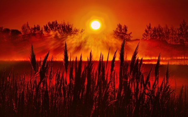 Earth Sunset Meadow Nature HD Wallpaper | Background Image