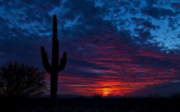 Earth Cactus Sunset Desert Silhouette Bush Sky Blue Cloud HD Wallpaper | Background Image