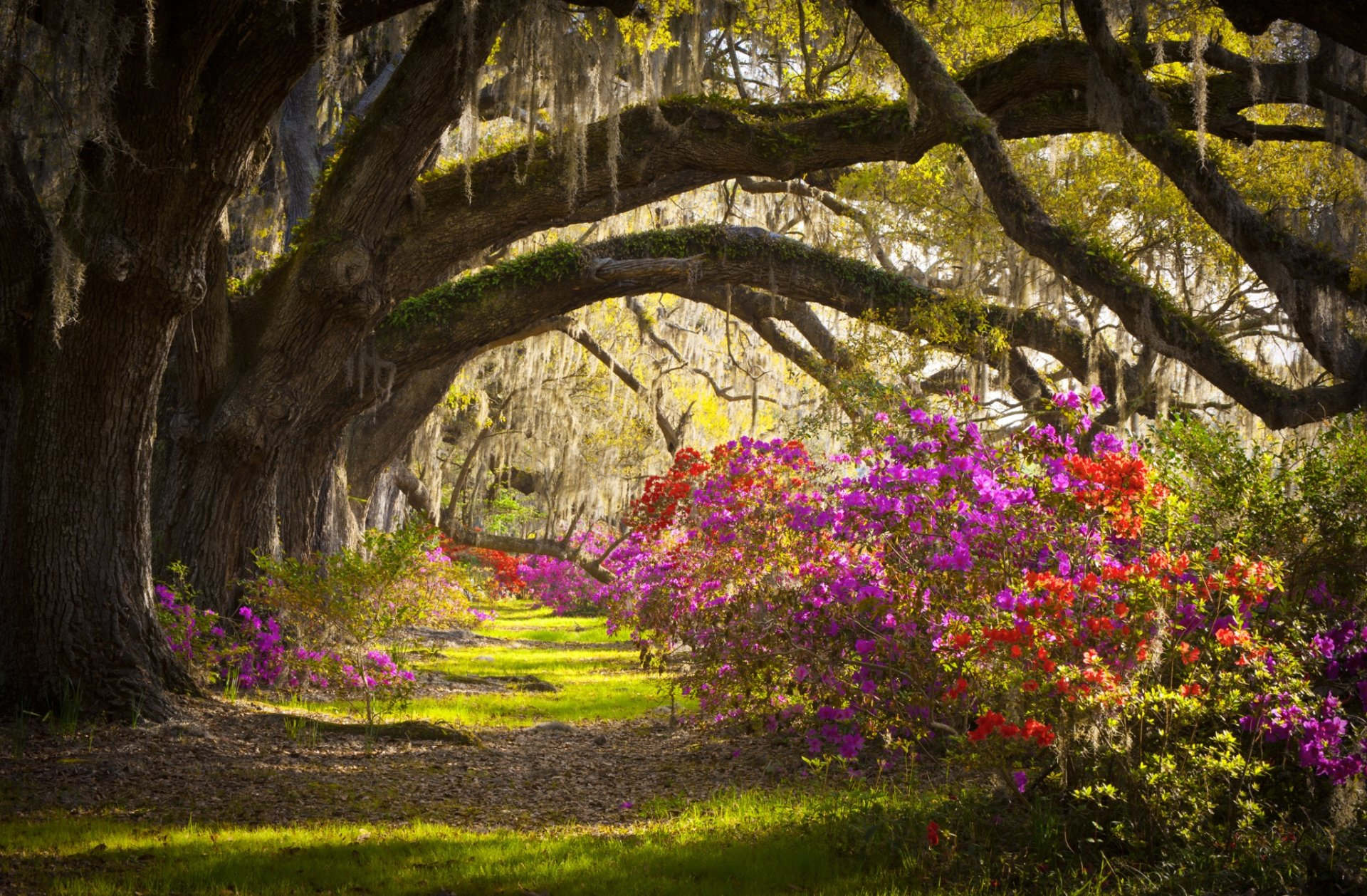 Earth - Magnolia  Tree South Carolina Azalea Flower Landscape Charleston Magnolia Plantation Wallpaper