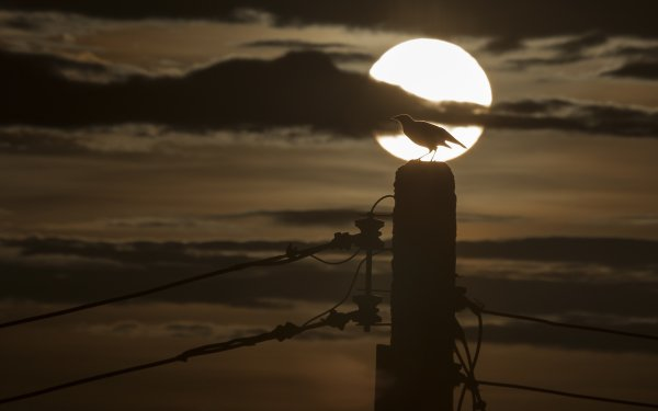 Photography Sunset Sun Cloud Twilight Silhouette Power Line HD Wallpaper | Background Image
