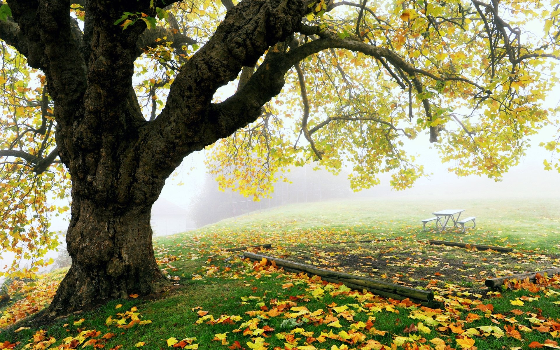 Earth - Tree  Earth Nature Landscape Fog Leaf Park Fall Wallpaper