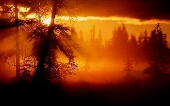 Earth Sunrise Nature Landscape Orange Light Tree HD Wallpaper | Background Image