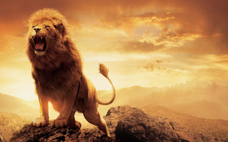 Hd wallpaper lion - Hd Wallpaper Background Id 614309