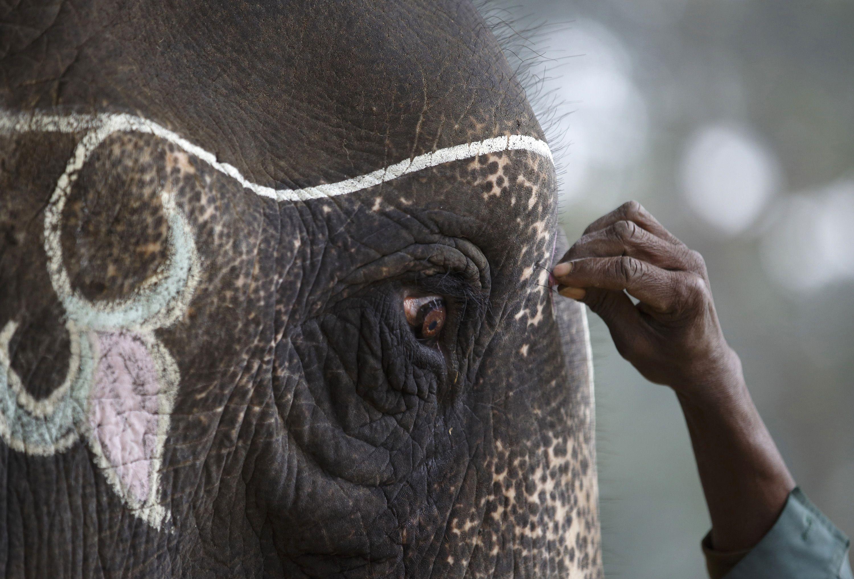elephant télécharger gratuit
