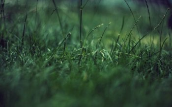Earth - Grass Wallpapers and Backgrounds ID : 64108