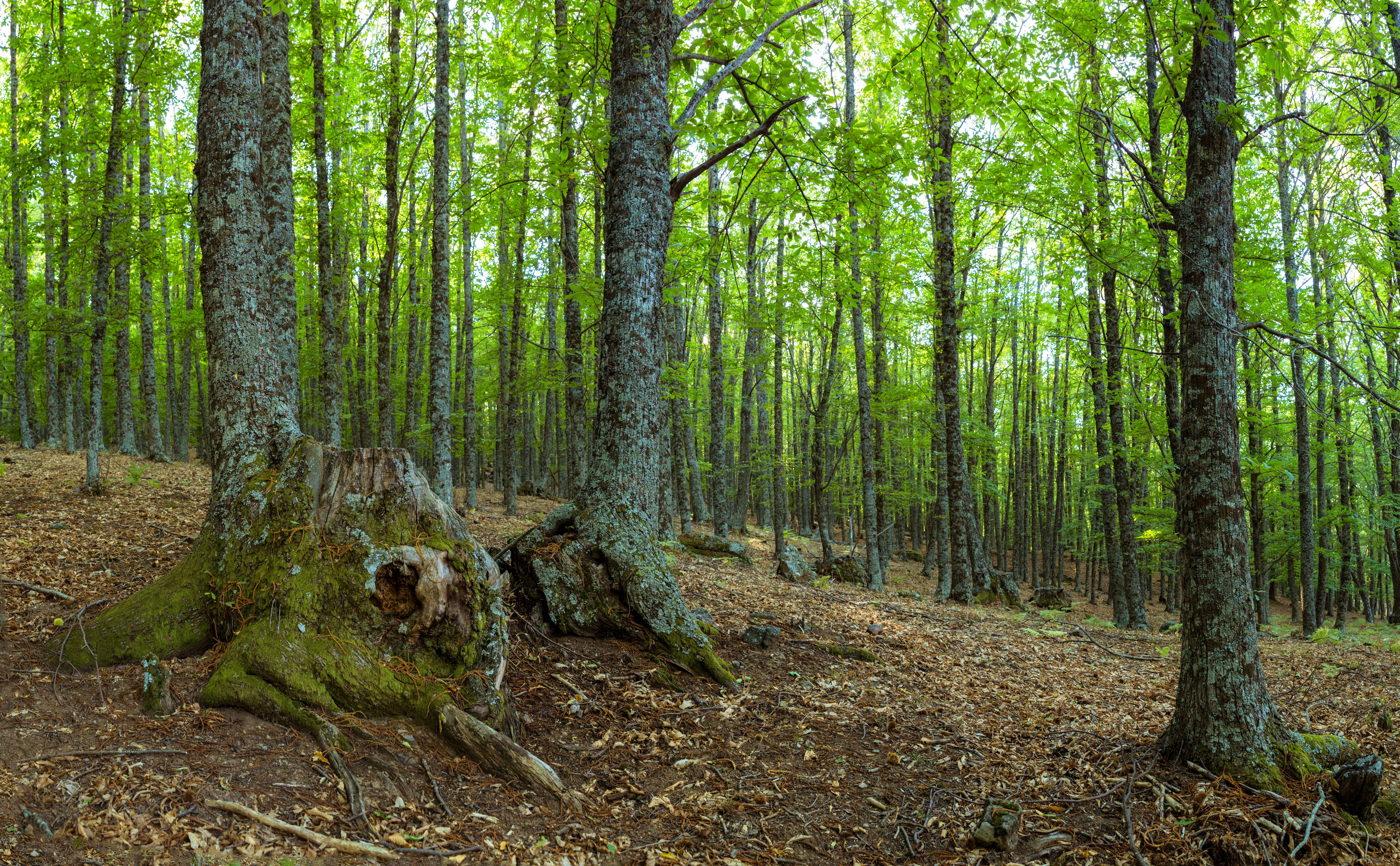 Bosque 8k Ultra Fondo De Pantalla Hd Fondo De Escritorio