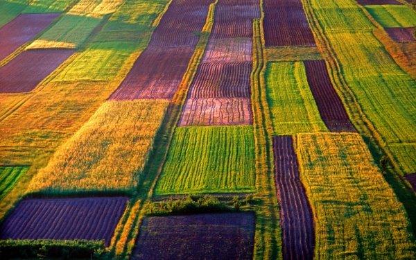 Tierra/Naturaleza Campo Granja Organic Crops Plantation Fondo de pantalla HD | Fondo de Escritorio