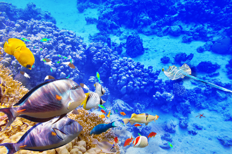 105 4K Ultra HD Underwater Wallpapers