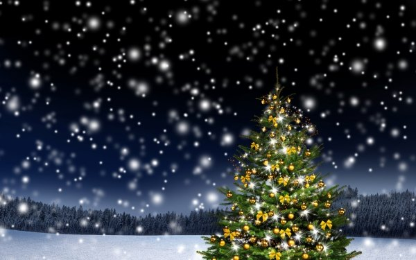 Holiday Christmas Forest Snow Christmas Tree HD Wallpaper | Background Image