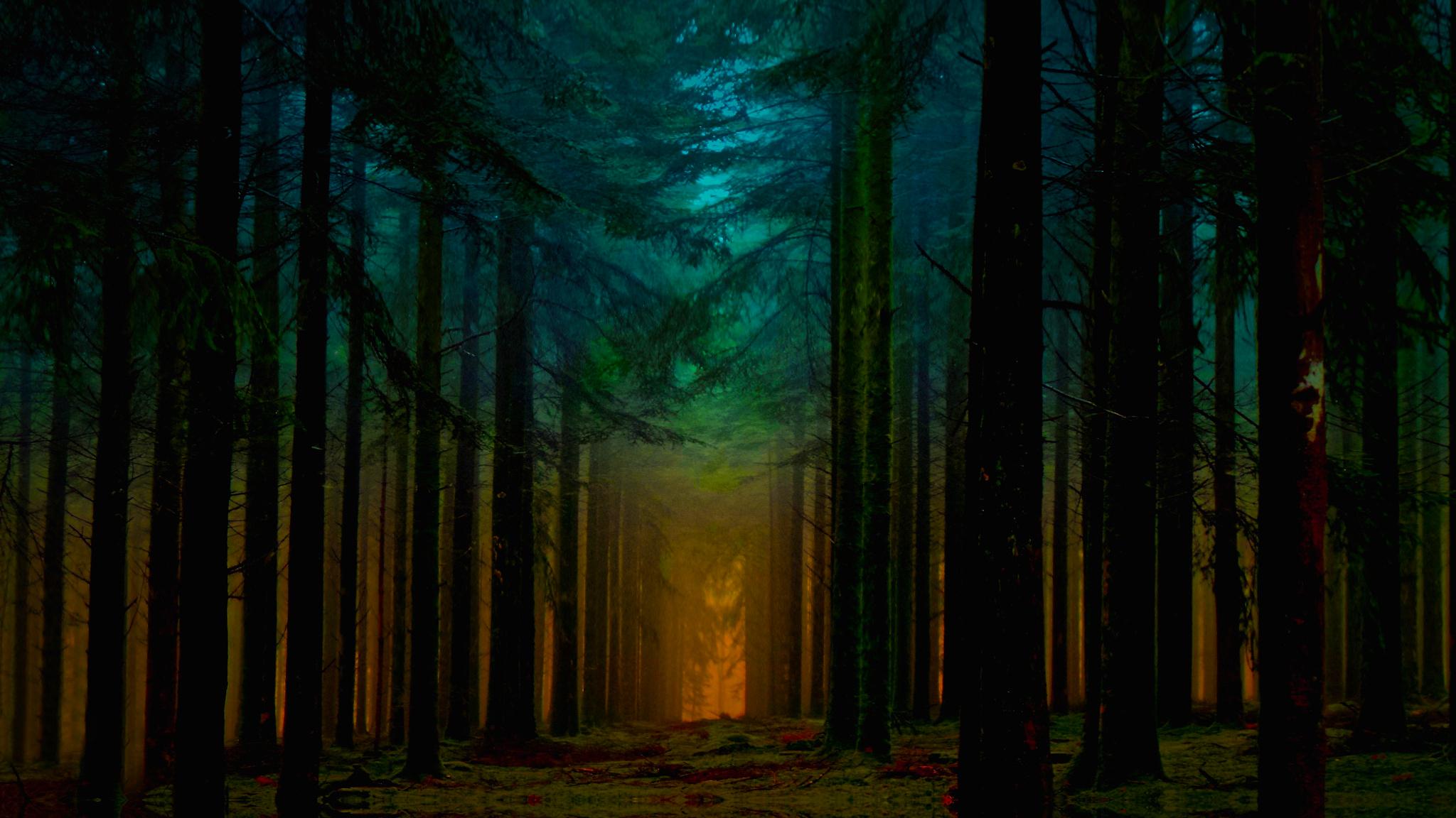 Forest at dawn full hd fondo de pantalla and fondo de for Fotos 2048x1152