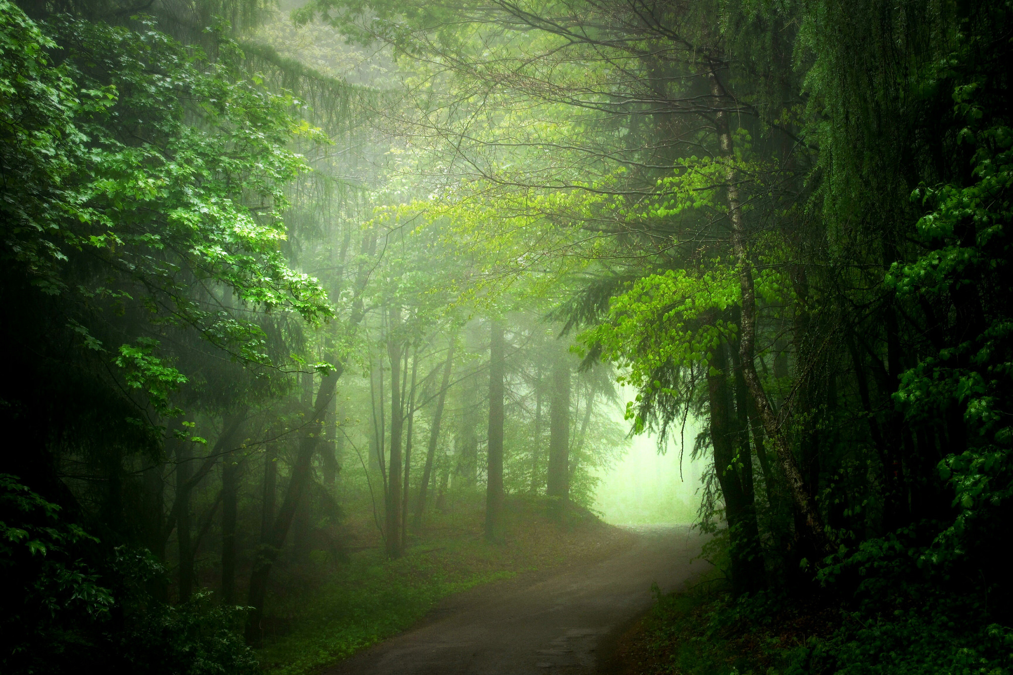 Look - Green misty forest video