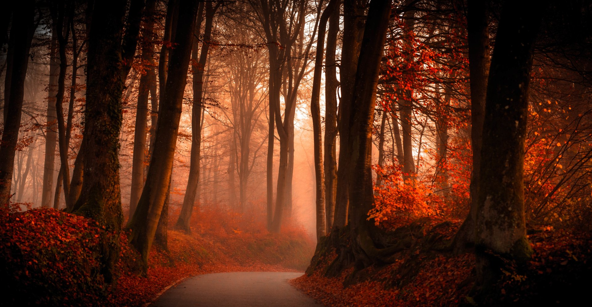 Man Made - Road  Earth Nature Forest Tree Red Foliage Fall Fog Wallpaper