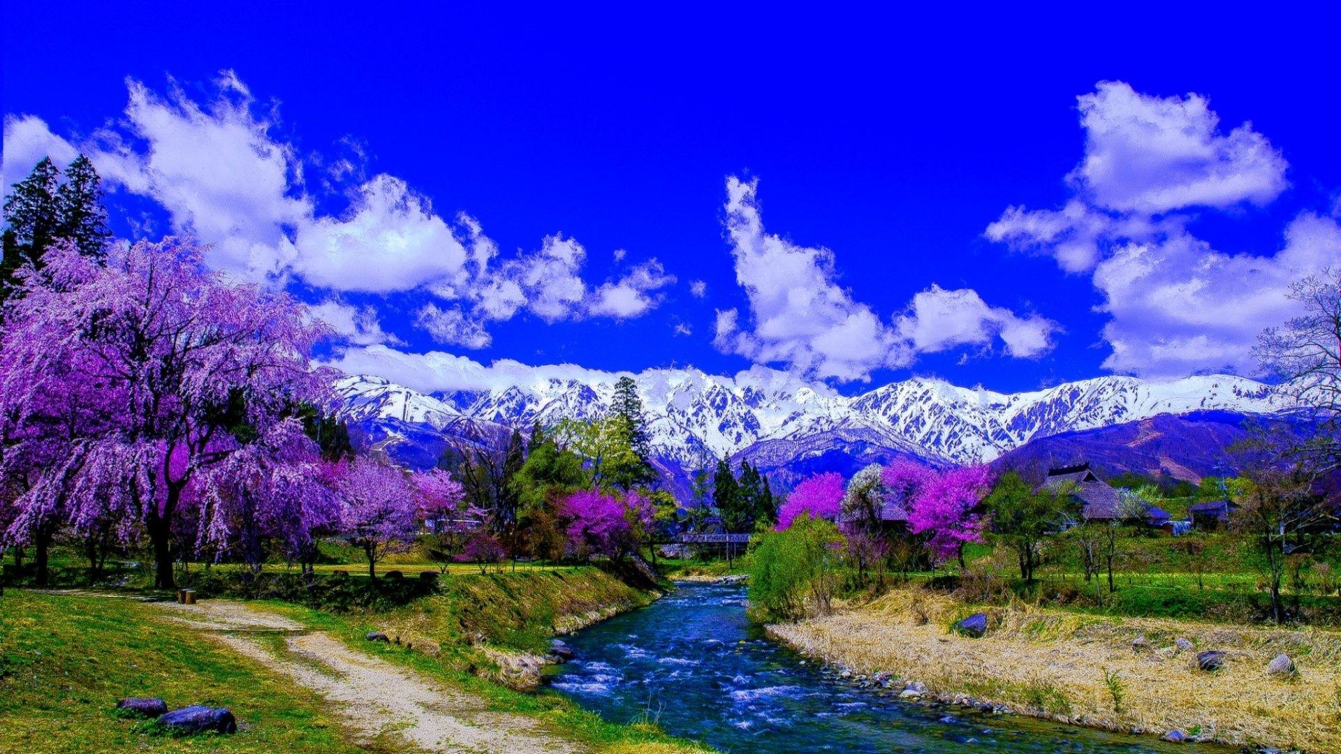 Purple trees alone the river and snow covered mountain hd for Immagini sfondo desktop primavera