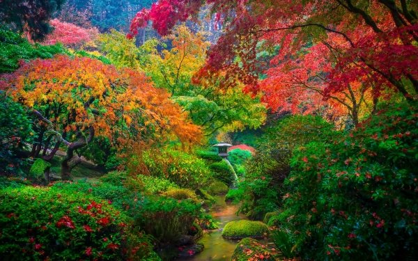 Man Made Japanese Garden Garden Fall Foliage Tree Colorful Nature HD Wallpaper | Background Image
