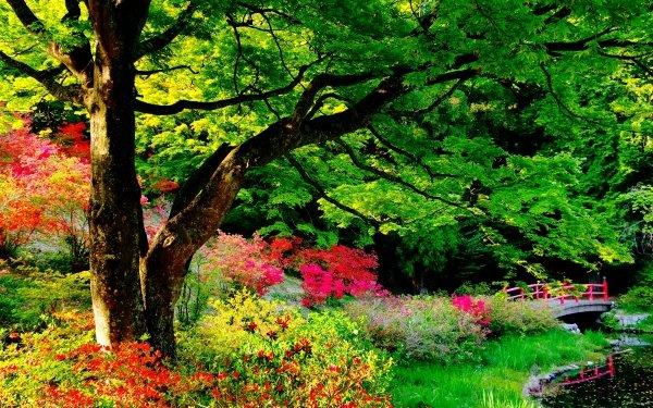 Man Made Japanese Garden Garden Bridge Leaf Tree Flower Shrub Colorful HD Wallpaper | Background Image
