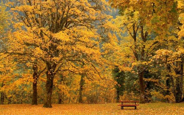 Terre/Nature Arbre Arbres Automne Picnic Newhalem Washington Fond d'écran HD | Arrière-Plan