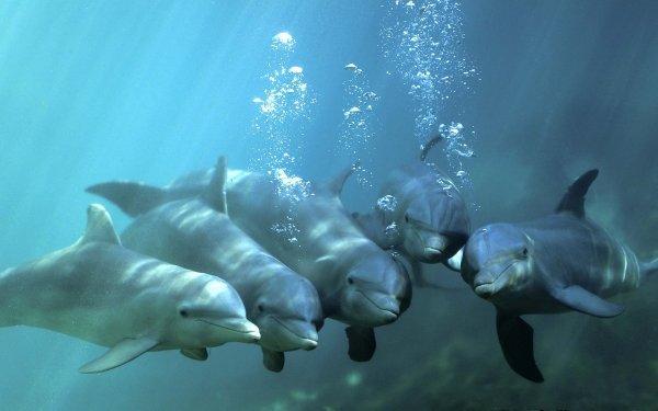Animal Dolphin Bottlenose Underwater HD Wallpaper | Background Image