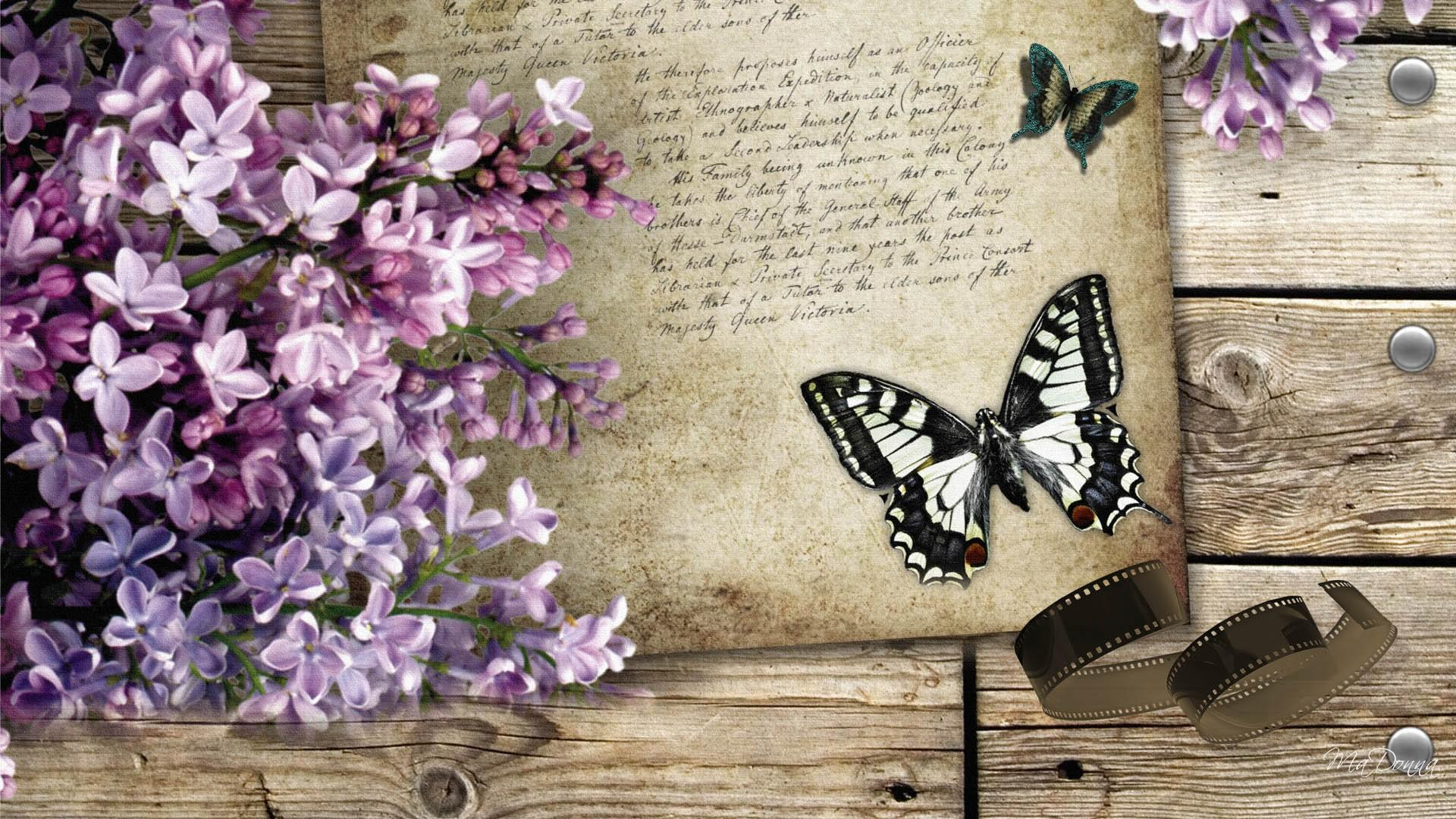Vintage still life with lilacs and butterflies full hd for Lilac butterfly wallpaper