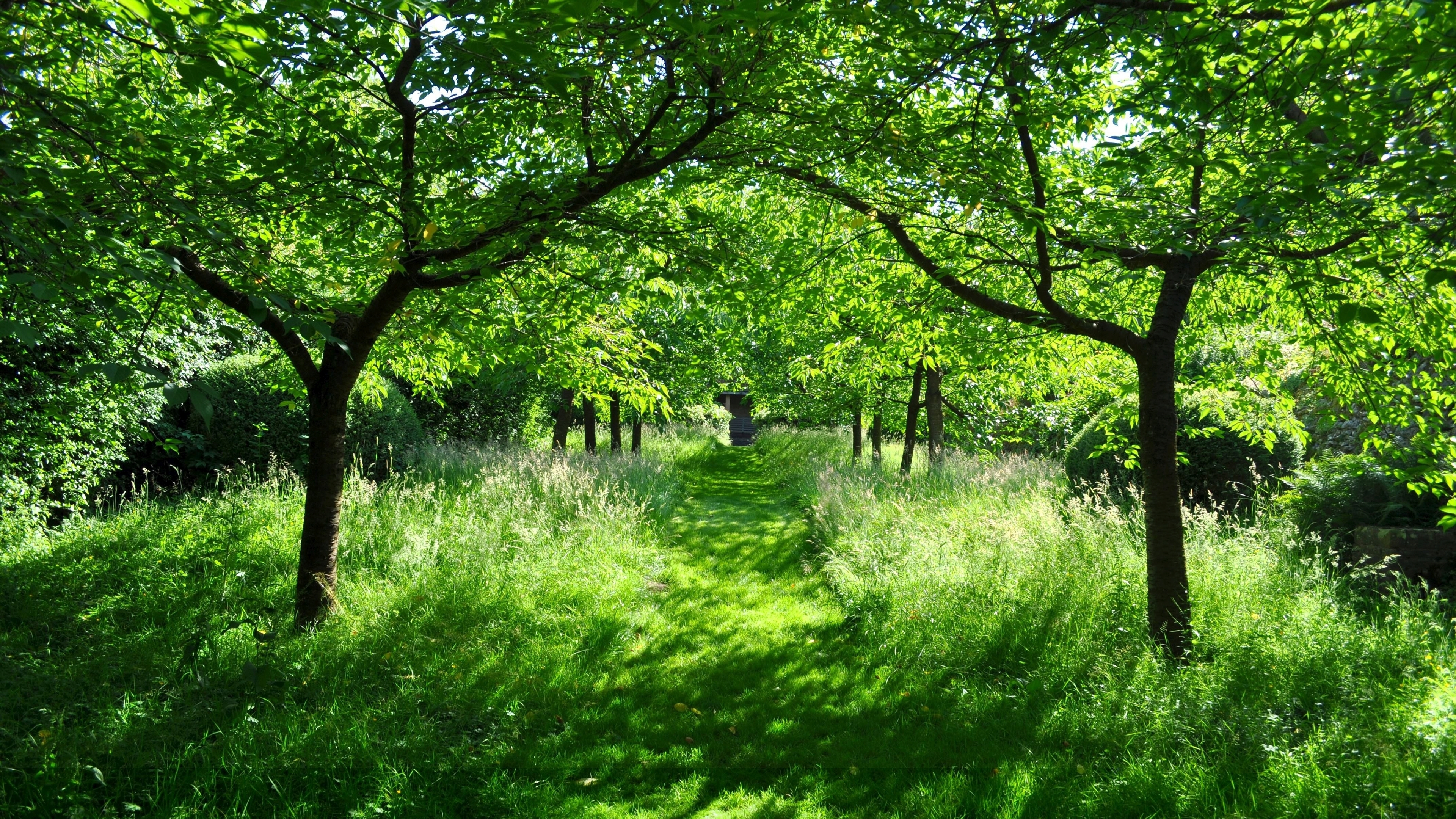 green tree forest - photo #44